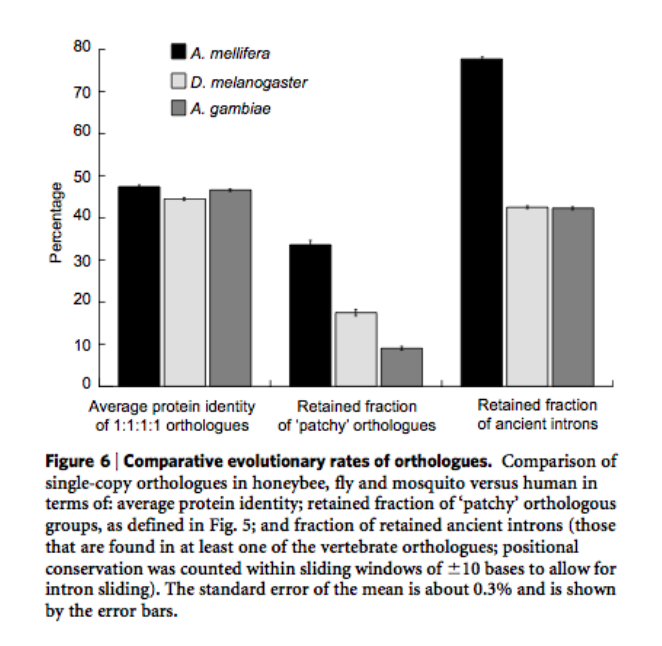 Comparaison des gènes orthologues chez trois espèces dont A.mellifera