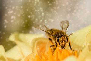 abeille-fleur-pollen-pixabay-myriams-fotos