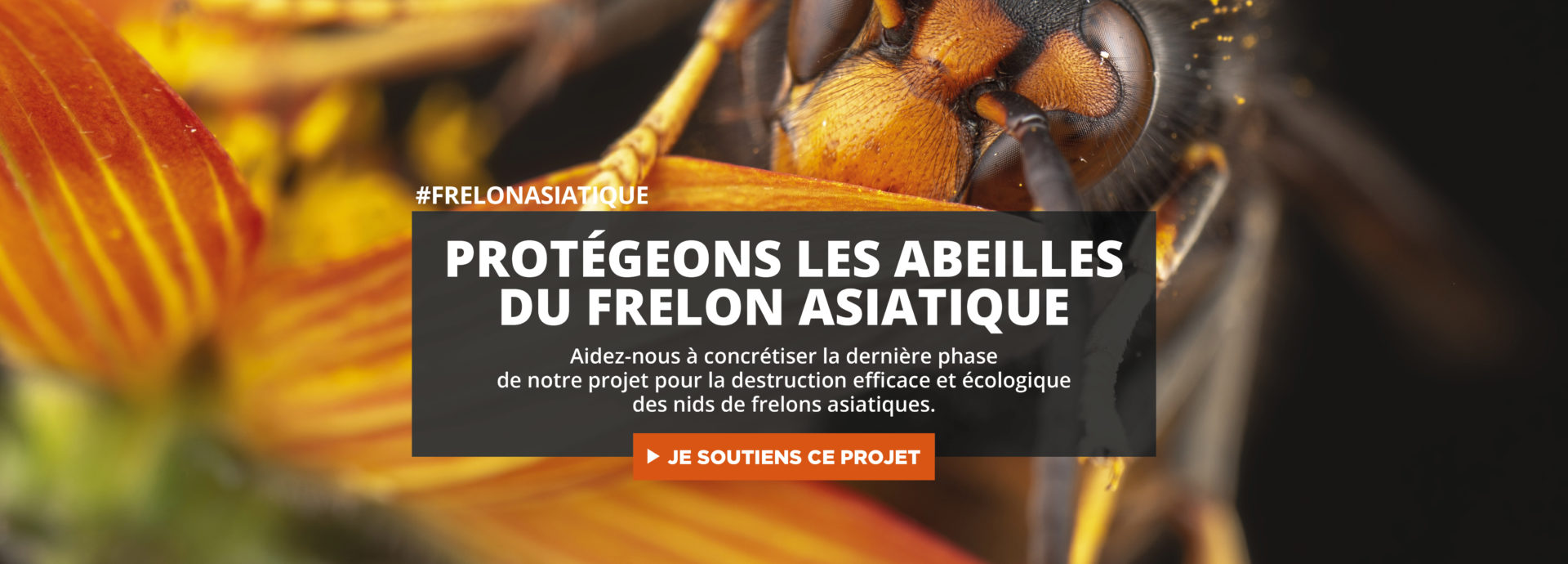 frelon-asiatique_slide_siteweb
