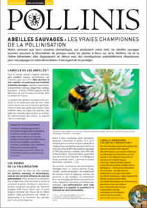 abeilles-sauvages-fiche-thematique-pollinis