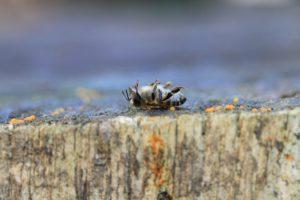 abeille-morte-pixabay-rostichep
