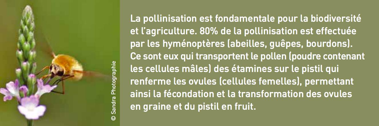 pollinisation fondamentale