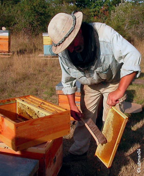 apiculteur et miel