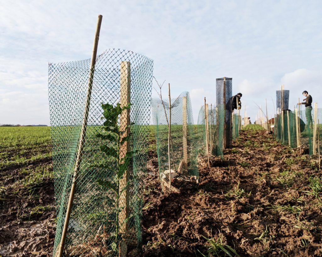journee-plantation-germainville-haies-pour-pollinisateurs