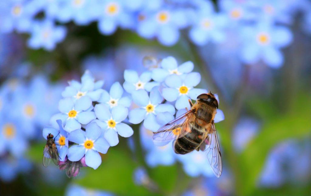 mouche pollinisateurs dypteres