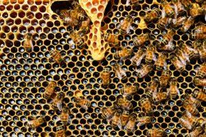 beehive-pixabay-PollyDot