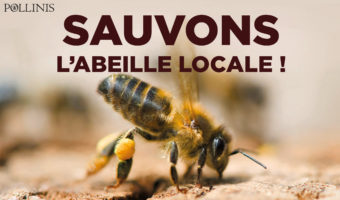 sauvons-labeille-locale-aspect-ratio-340x200