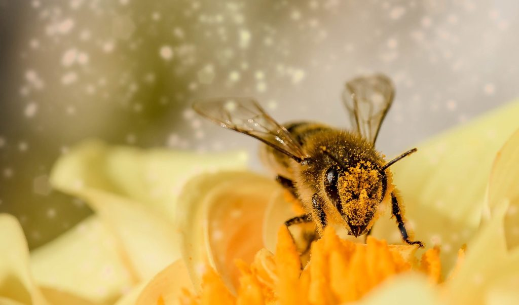 abeille-fleur-pollen-pixabay-myriams-fotos-aspect-ratio-340x200