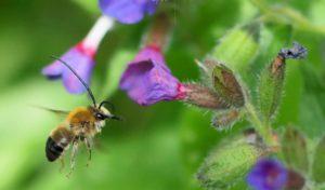 abeille-sauvage-credit-luc-aspect-ratio-340x200