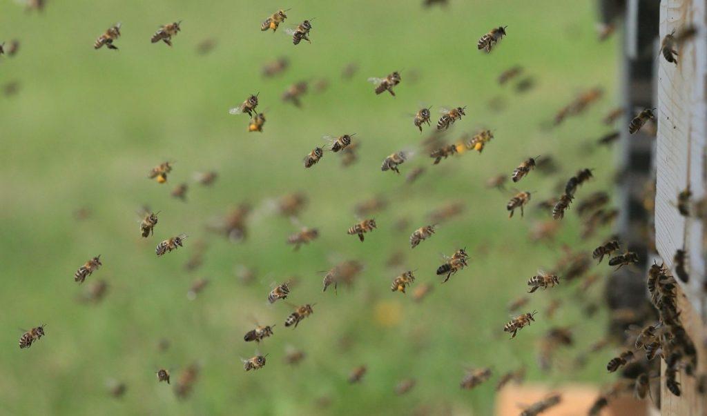 bees-pixabay-e1553183406867-aspect-ratio-340x200