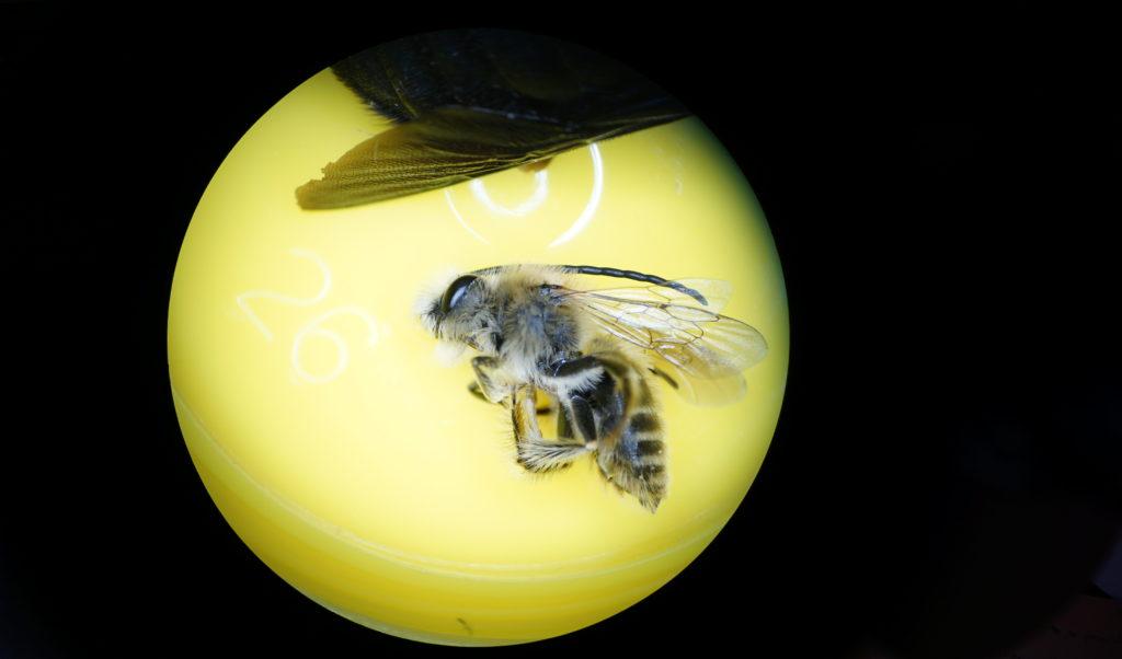 focale-apiformes-rond-jaune-aspect-ratio-340x200