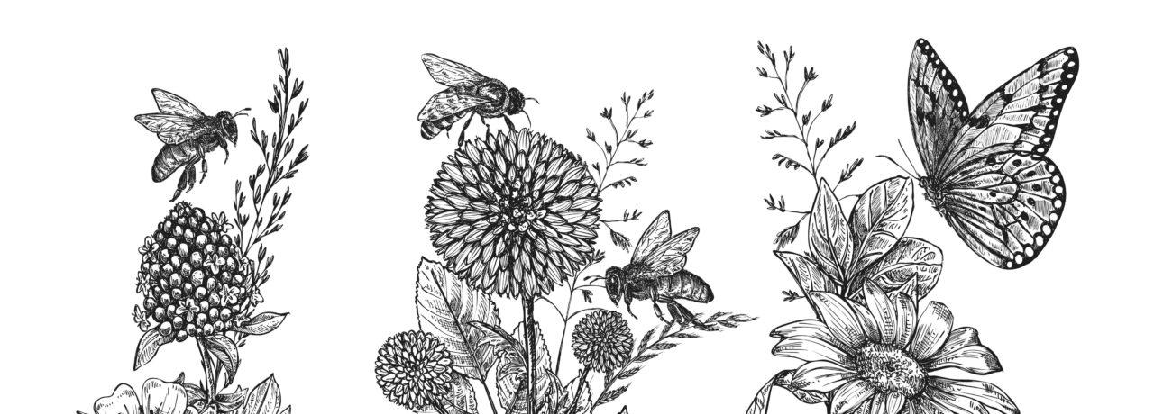 illustration2-1-aspect-ratio-1500x540