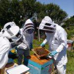 pollinis-pettis-ile-de-groix