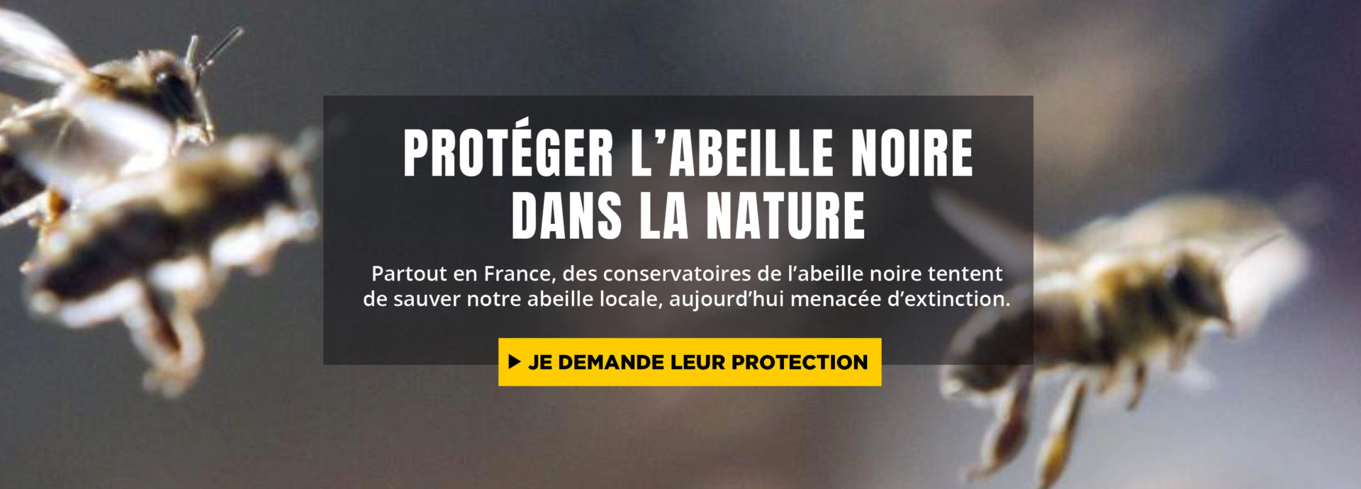 protection-juridique-can