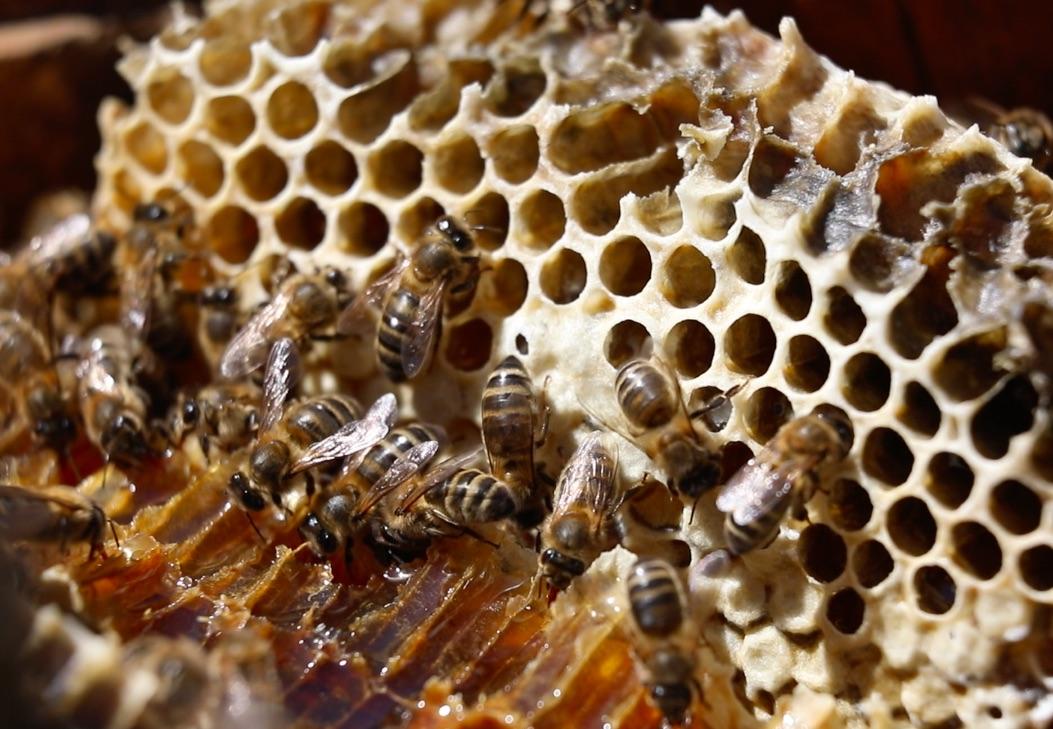 abeilles noires