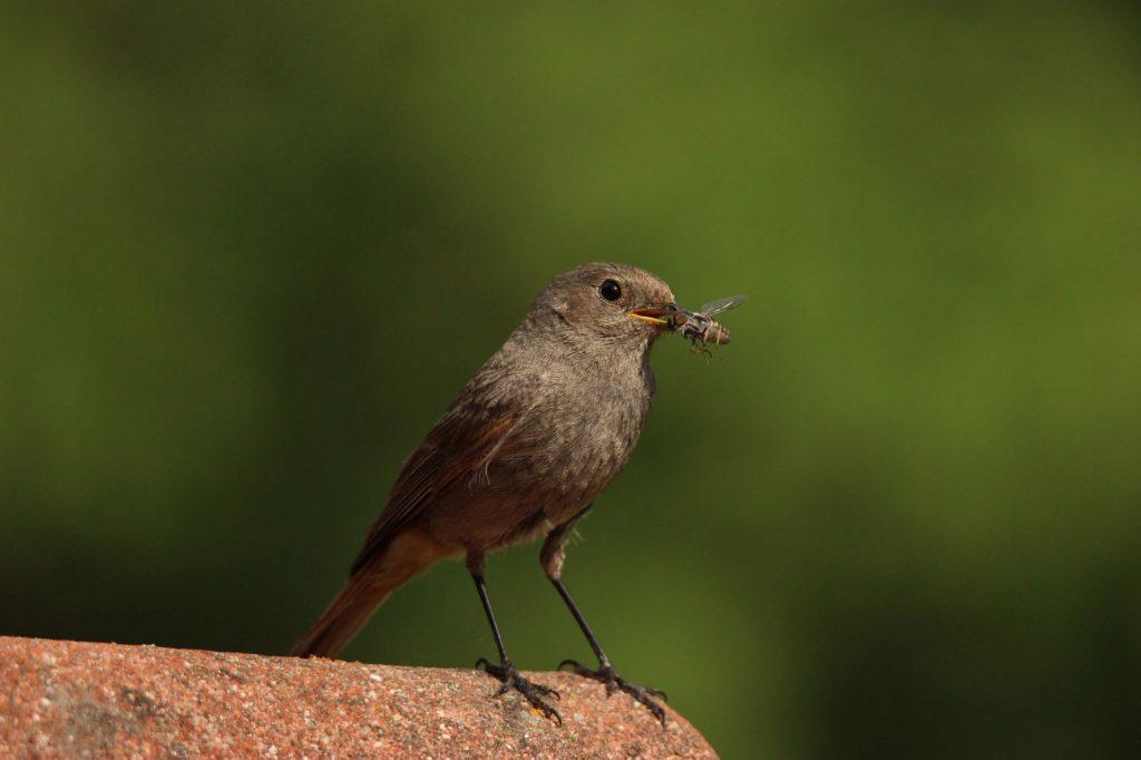 oiseau mangeant un insecte DR Thomas Wilken PIXABAY