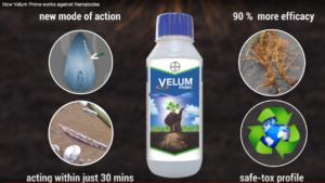 Bayer publicite Velum nematodes