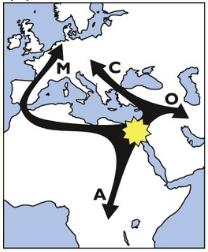 migration-apis-mellifera-1