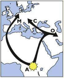 migration-apis-mellifera-3