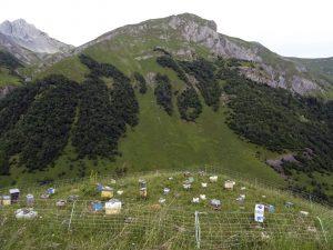 3pnv017603-PN-Vanoise-LAMBERT_Alicia