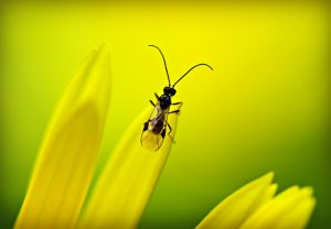 insect-mabel-amber-pixabay-aspect-ratio-236x164
