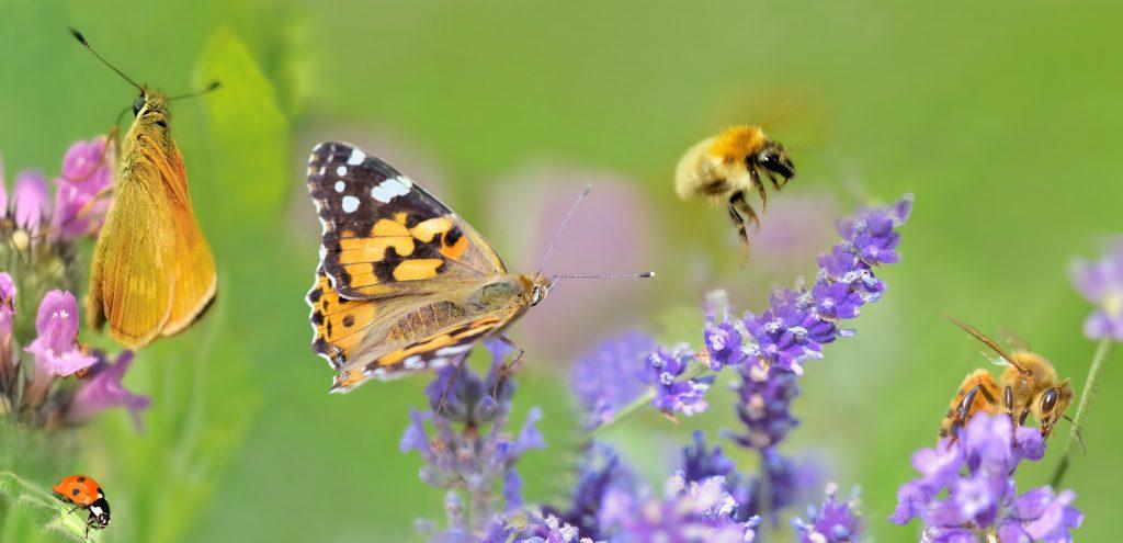 pollinisateurs fleurs