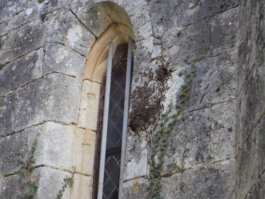 colonie abeilles mur