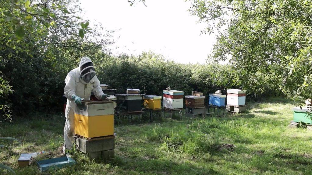 Groix_varroa_extrait_video_pollinis2