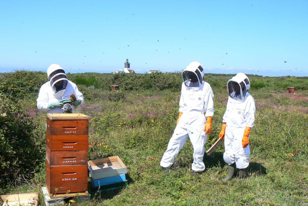 Le Conservatoire de l'abeille noire de l'ïle de Groix, membre de la FEdCAN (c) ASAN