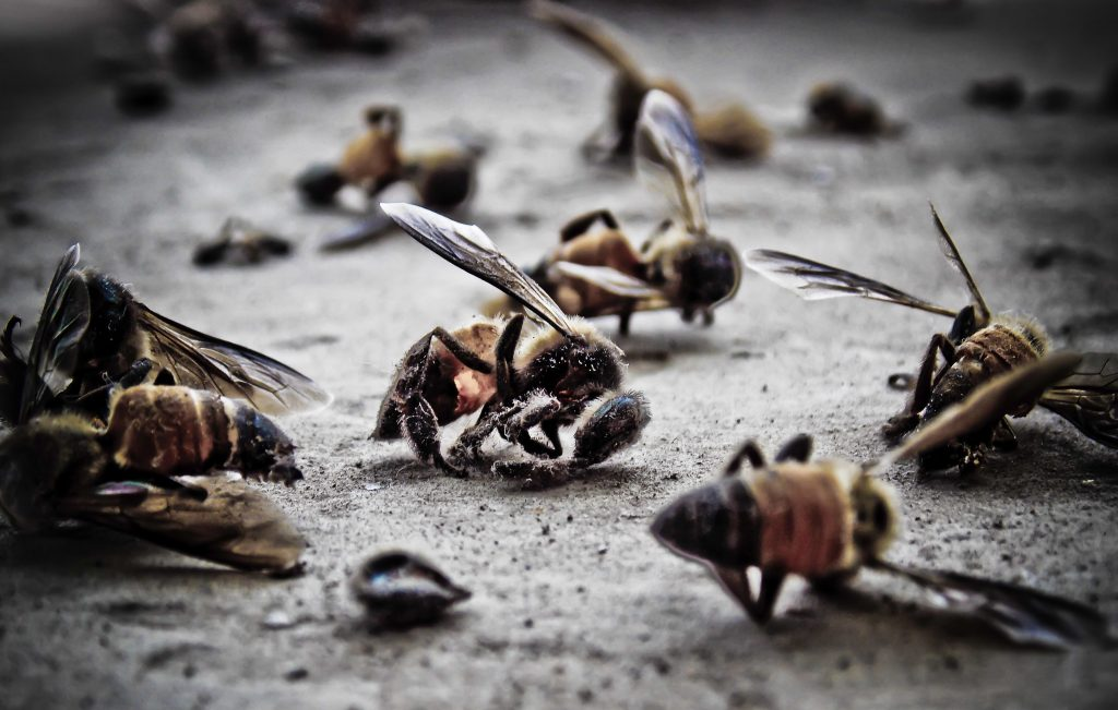 Macro,Photo,Of,Dead,Bees,On,A,Dusty,Surface.