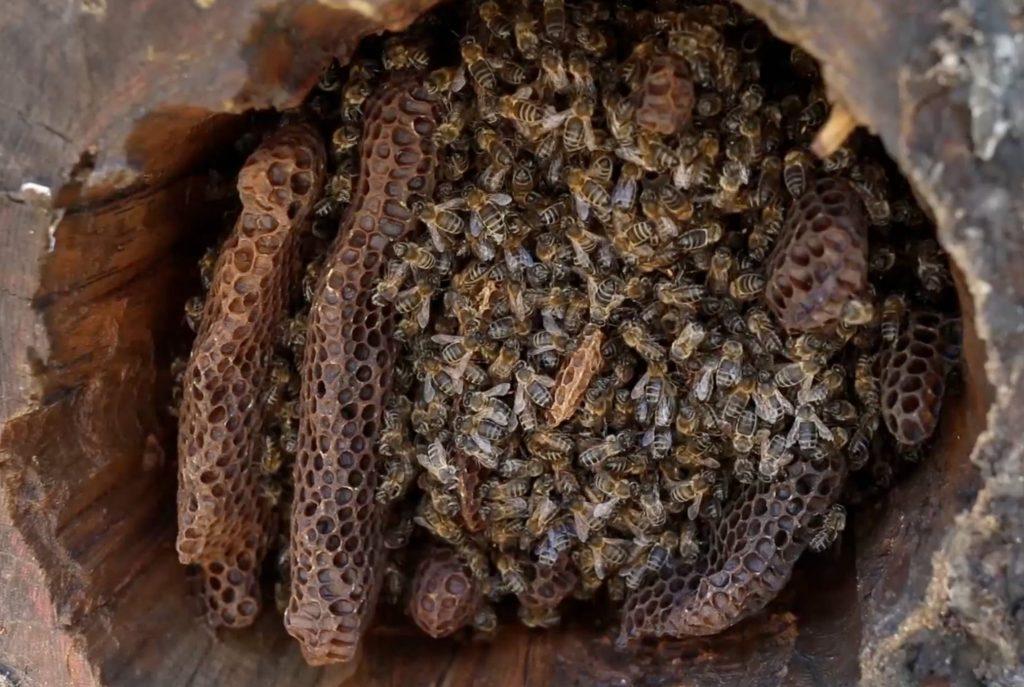 Abeille et ruche tronc 1