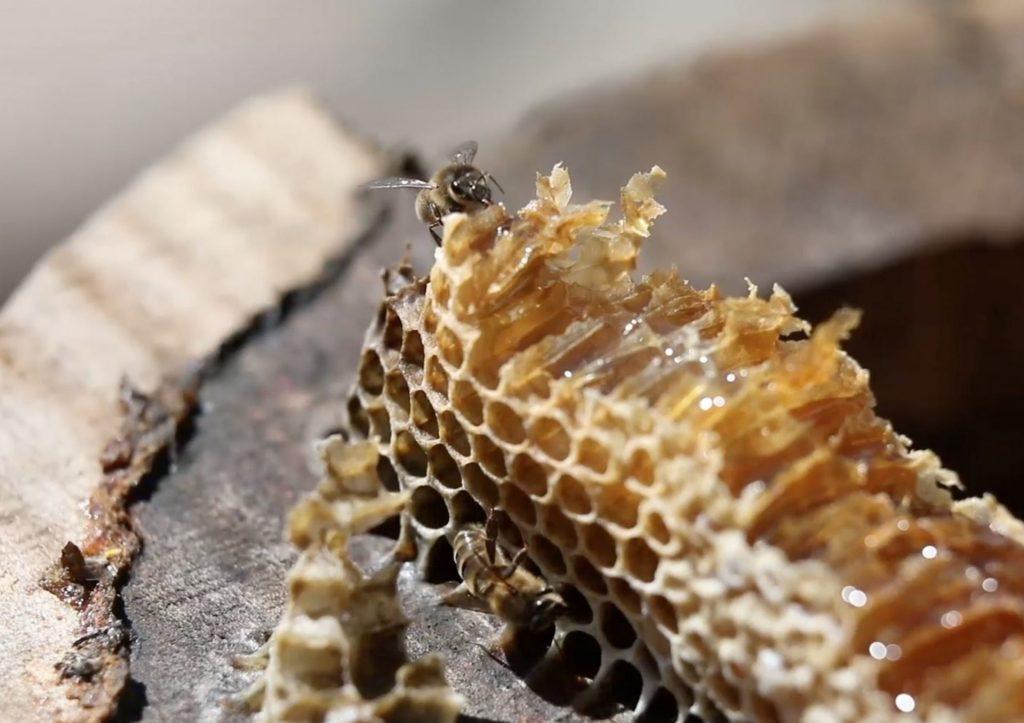 Abeille et ruche tronc 2