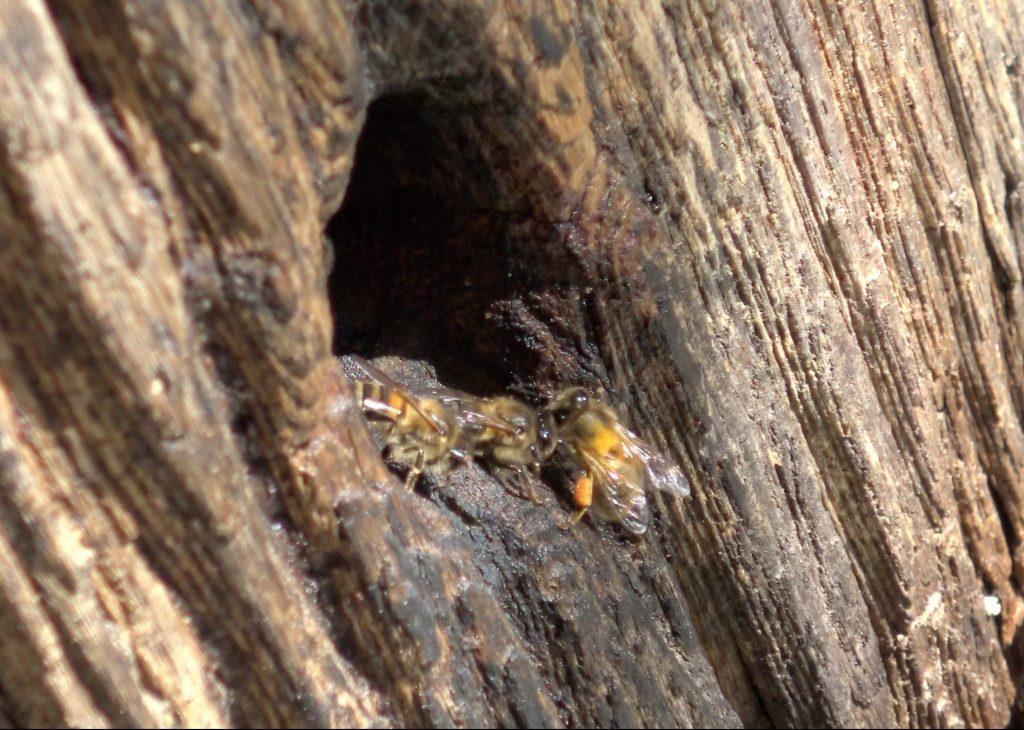 Abeille et ruche tronc 3