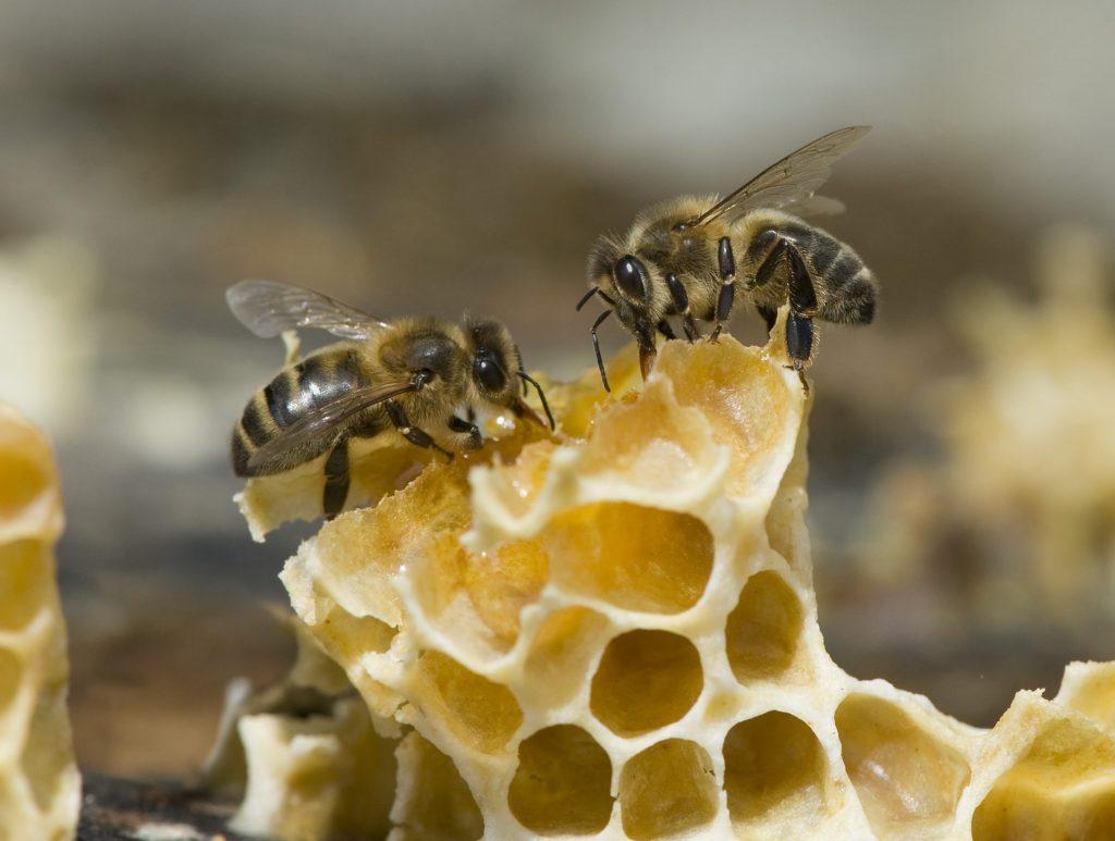 Thierry Vezon abeille