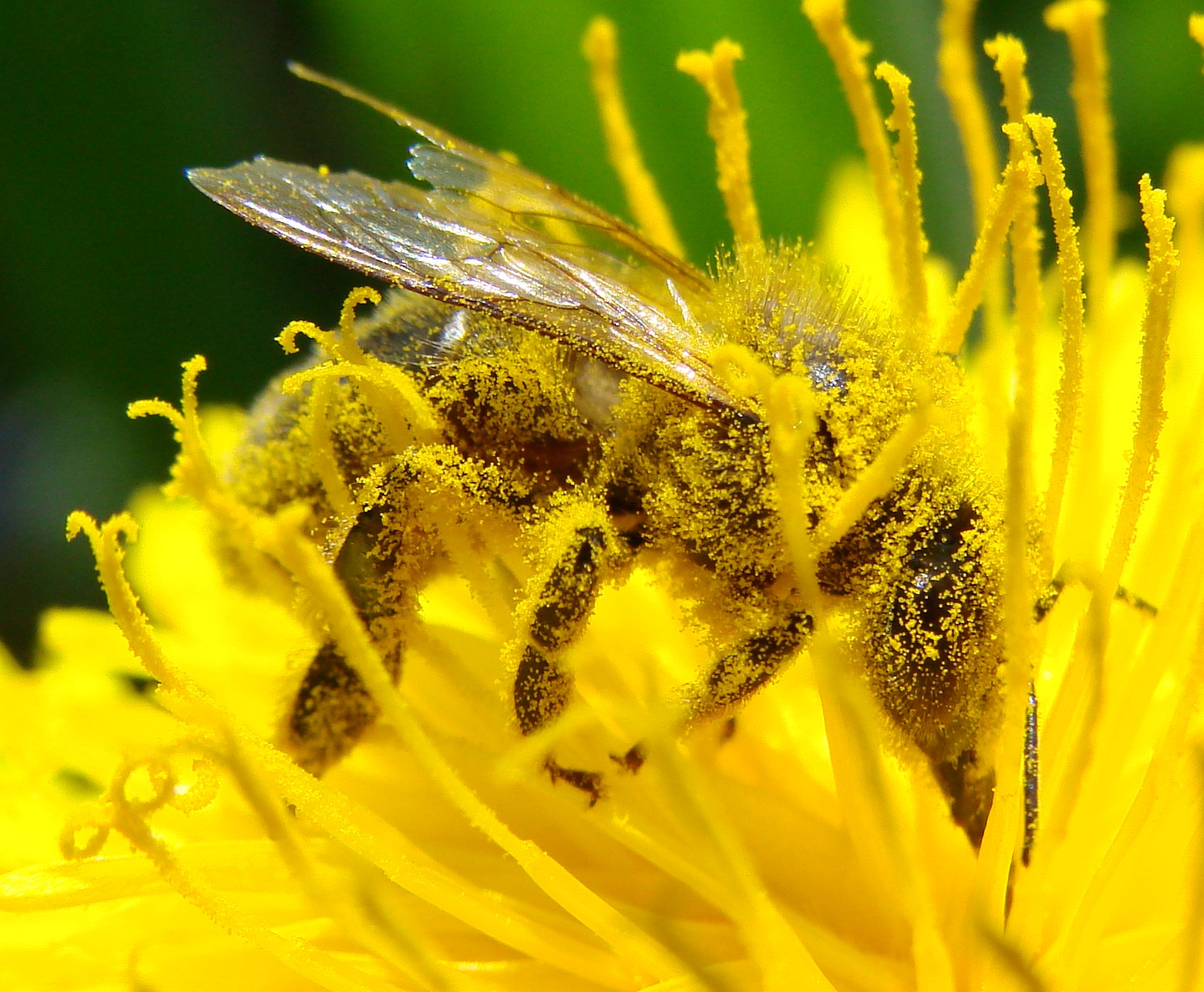 The crucial role of pollinators in the insect world