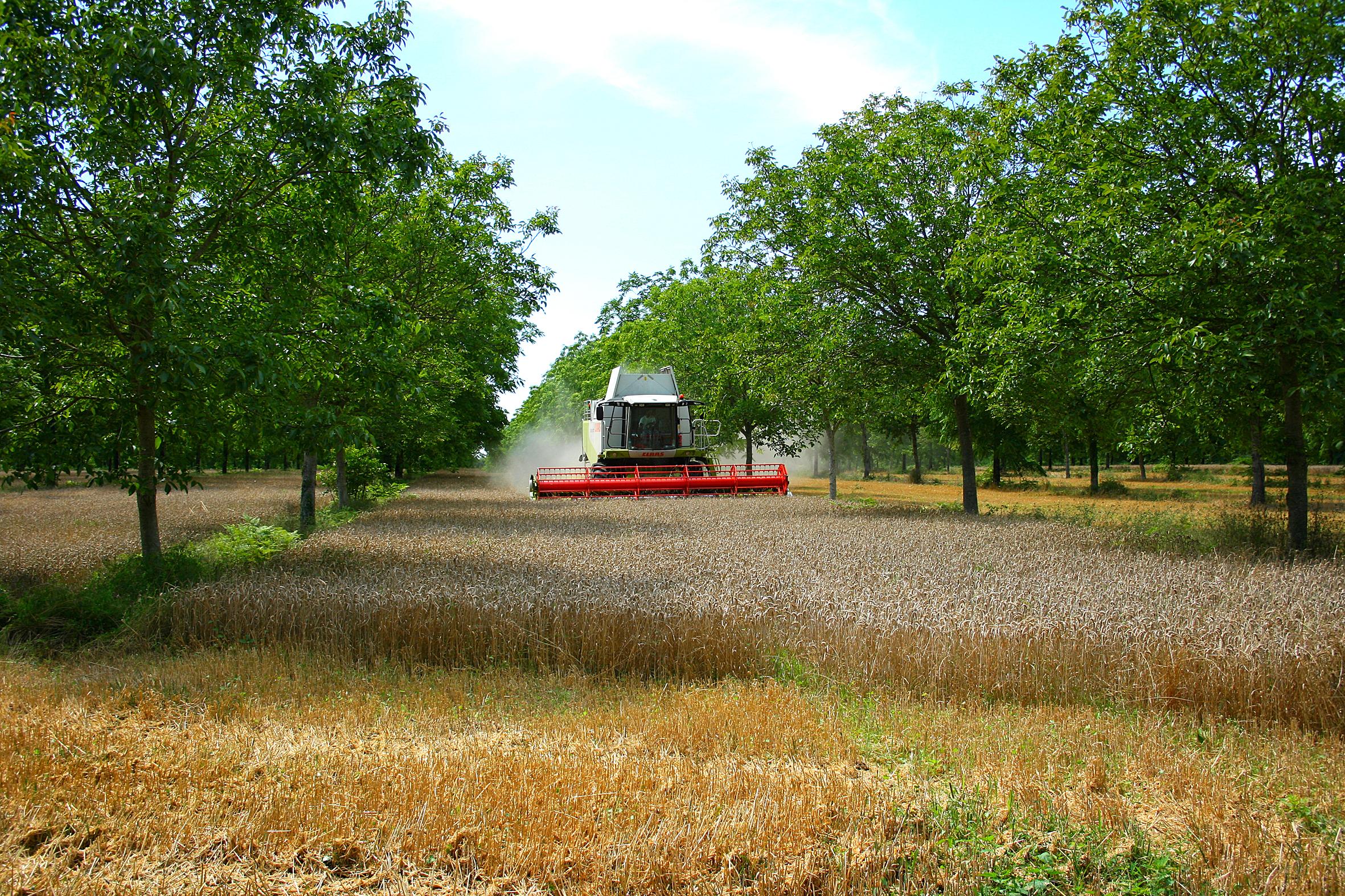 L'agroforesterie, une pratique agro-écologique d'avenir. Photo : ©agroof