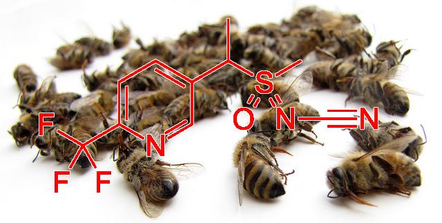 Le sulfoxaflor : un nouveau pesticide toxique pour les abeilles autorisé en Europe - Photo : S. Caza