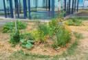 Parcelle jardin Villejuif