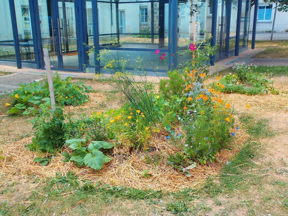 Une parcelle du jardin aromatique fleuri du Villejuif.