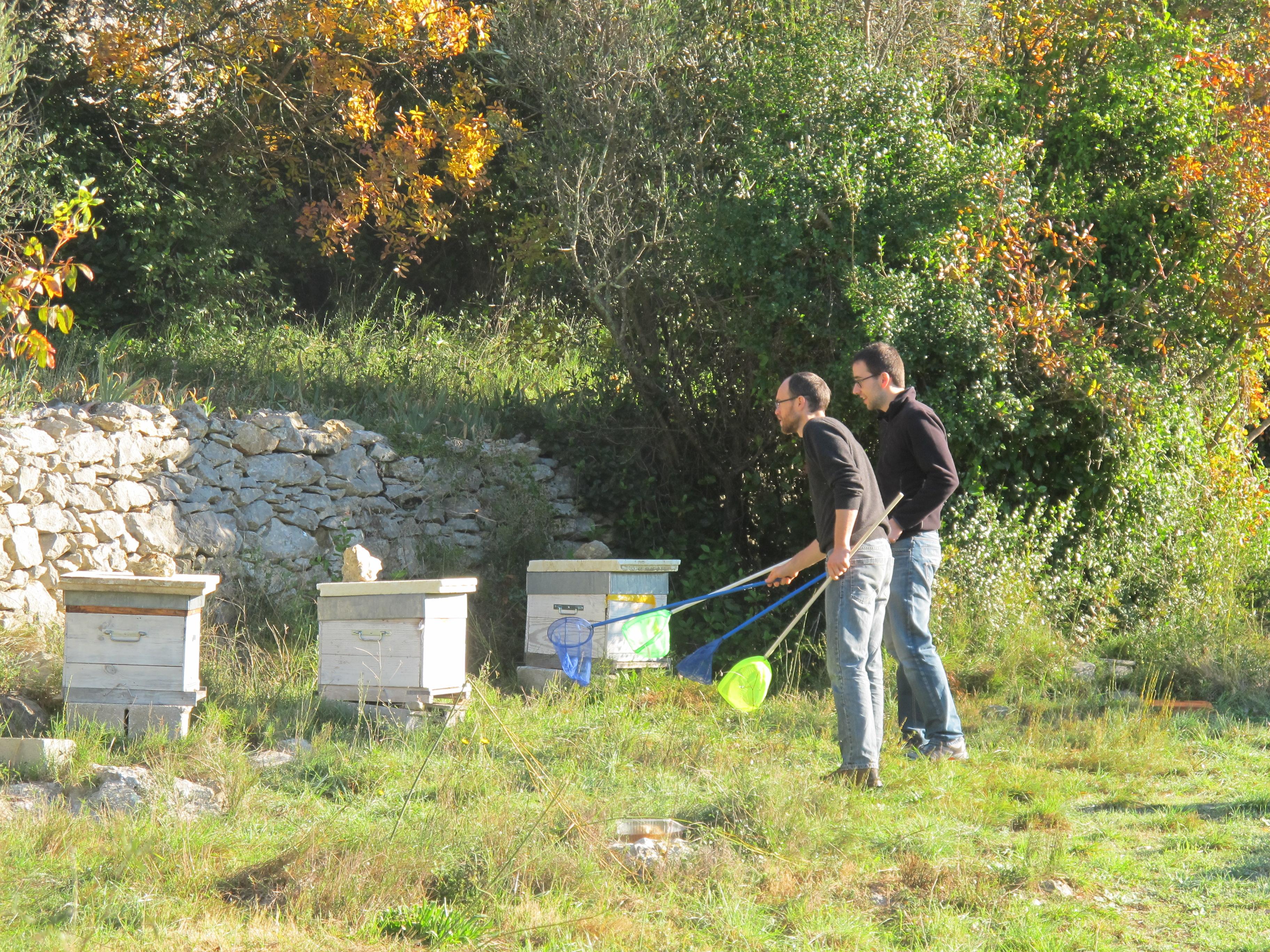 Guillaume et François, deux ingénieurs du projet, attrapent des frelons asiatiques devant les ruches, pour mener les tests.